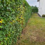 Gartenpflege von Gartenbau Lange